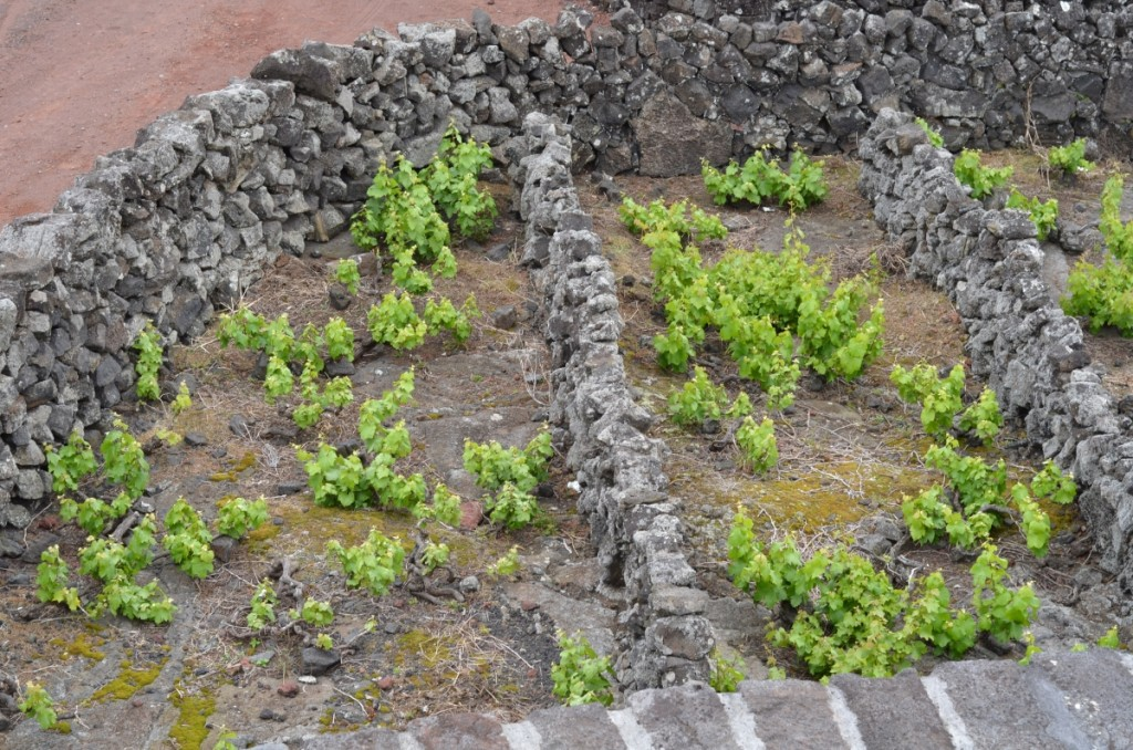 How Volcanoes Make the Most Interesting Wine — Green Moxie