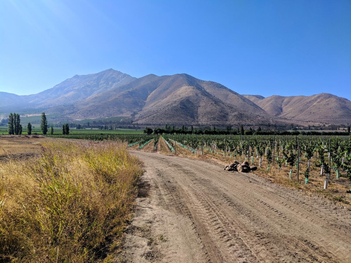 Santa Rita Wine Tour: Vineyard Biking and Vino Sipping in Chile